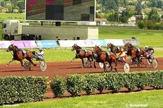 arrivée saint galmier 5 15 13 14 9 - demain longchamp plat 16 chevaux
