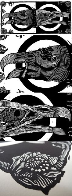 Mazatl ~ Extinción 2 (Revisited) ~ Linocut, Heavy Weight Guarro Superalfa Cotton Paper, 11 x 24 inch ~ On this linoleum blockprint, the California Condor (Gymnogyps californianus) is depicted. Its huge 3.0 m (9.8 ft) wingspan is the largest of any North American bird, and its weight of up to 12 kg. In the 20th century the California Condor population dropped to only 22 in the wild.