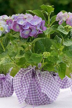 blue hydrangea, lilac gingham - inexpensive centerpieces - doubles as a great thank you gift for wedding helpers. Hortensia Hydrangea, Blue Hydrangea, Hydrangea Plant, All Things Purple, Green And Purple, Pastel Purple, Ikebana, Love Flowers, Beautiful Flowers