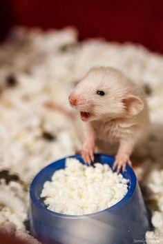 I love cream cheese :))