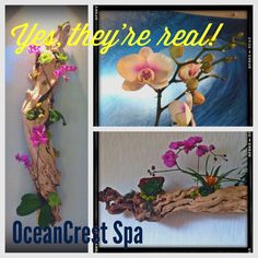 Beautiful orchids are part of our Spa décor. @HiltonCarlsbadResort @wild thing Crest Spa