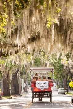 Ellis Photo Studio is the top photography business based in Charleston, South Carolina (SC) specializing in Wedding Photography and much more! Gold Wedding, Wedding Bells, Dream Wedding, Wedding Day, Wedding Dreams, Rustic Wedding, Wedding Stuff, Wedding Photos, Southern Charm Wedding