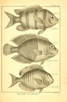 Tableau encyclopédique et méthodique des trois regnes de la nature. - Biodiversity Heritage Library