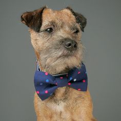 Pink, Light Blue and Grey Polka Dots on Navy Cotton Dog Bow Tie