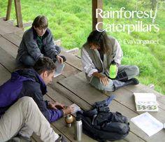 Rainforest Caterpillars