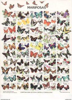 Unique Butterfly Tattoos, Butterfly Art, Butterflies Flying, Beautiful Butterflies, Butterfly Species, Garden Insects, Room Stuff, Cozumel, Haberdashery