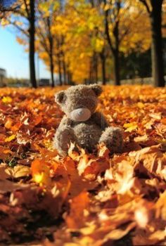 Love it! Small gray bear among maple autumn leaves