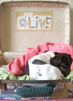 vintage suitcase doggie bed... i adore the fabric pieced name