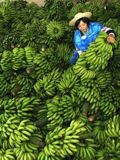 M. Tardif - La producción de bananas en Honduras es el más importante en la economía de Honduras. Es una fruta muy deliciosa y importante para su salud.