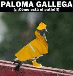 Viñetas sobre el temporal en Galicia | EcoListas
