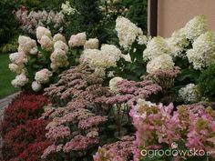 Hydrangea Paniculata, Walled Garden, Landscaping Plants, Gardening, Landscape, Vegetables, Bags, Lawn And Garden, Handbags