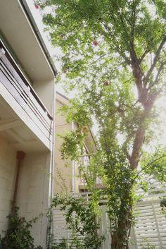 ザクロの木・庭・スタジオ