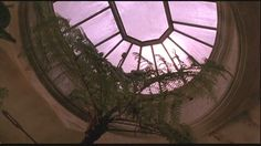 "conservatory ceiling from the film ""Green Card"""
