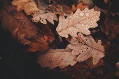 Word of the Week 3/9/2021 Change #WotW | Early Rising Mum Free Fall Wallpaper, Hd Wallpaper, Autumn Leaves Wallpaper, Cross Wallpaper, Minimal Wallpaper, Iphone Wallpapers, Photoshop, Leaves Changing Color, Desktop Images