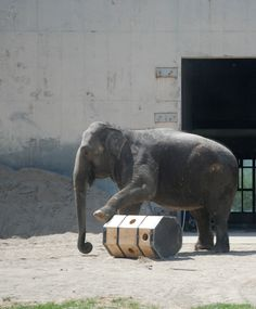 Students make elephant enrichment (slideshow)