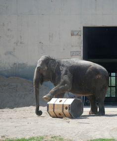 Students make elephant enrichment (slideshow)