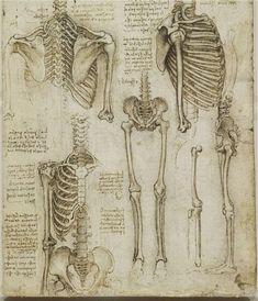 Leonardo da Vinci: Anatomy of an artist - Telegraph