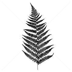 6246252_папоротник-силуэта-дерево-лес-природы-дизайна.jpg (600×600)