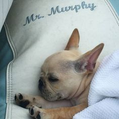 I love the boat and naps...mostly naps. #Cute