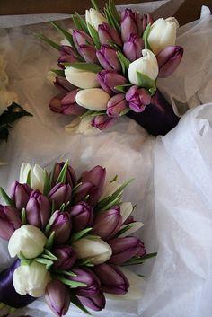 Gorgeous eggplant-colored tulips