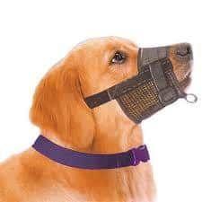 nice Normativa Perros Potencialmente Peligrosos