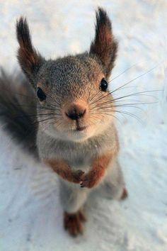 Cute Creatures, Beautiful Creatures, Animals Beautiful, Squirrel Pictures, Cute Animal Pictures, Nature Animals, Animals And Pets, Happy Animals, Cute Baby Animals