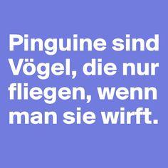 #Pingu #Vogel #Boldomatic #Sprüche