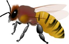 Animal Bee Honey Honeybee transparent image
