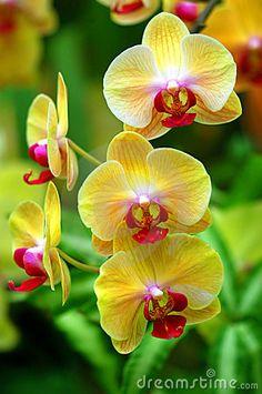QUE BELLEZA DE #ORQUÍDEAS AMARILLAS  Las orquídeas son plantas herbáceas,…