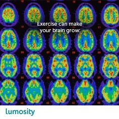 Exercise can stimulate the growth of new neurons — but until recently, scientists didn't understand how. Now new research shows that neuronal growth results from an exercise-triggered chain reaction that produces a protein called Brain Derived Neurotrophic Factor (BDNF). BDNF stimulates the growth of new brain cells and can even stop the destruction of existing brain cells — which is particularly beneficial to your hippocampus, a brain area linked to learning and memory.