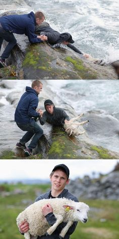 Two guys rescuing a lamb