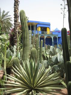 Collection de cactus au jardin Majorelle - Marrakech
