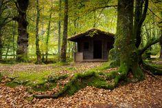 Refugio en el bosque de Ucieda  #Cantabria #Spain