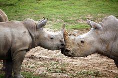 Eastern Cape Rhino - www.susconafrica.org