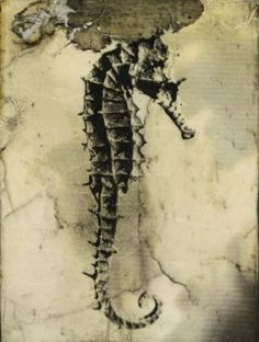 Seahorse print.  This print has the most wonderful aged look - as though the Seahorse was a fossil.