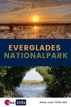 Wer eine Reise nach Florida plant, sollte unbedingt den Everglades Nationalpark besuchen. Hier angekommen scheint es so, als würde man eine völlig andere Welt betreten. Die Everglades, ein riesiges Sumpf-Gebiet, stellen mit ihrer außergewöhnlichen Flora und Fauna einen unbeschreiblichen Schatz der Natur dar. Das Gebiet ist nahezu komplett mit Gras bewachsen und meist nur wenige Zentimeter tief. Nationalparks Usa, Flora Und Fauna, Bryce Canyon, Gras, Florida, Beach, Water, Outdoor, Kinds Of Birds
