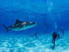 O evento com o Discovery Scuba, atração em que o público pode vivenciar a experiência de um mergulho, gratuitamente, em uma das piscinas do local. Confira a programação completa aqui.
