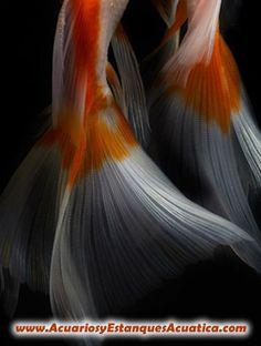 BUENOS DIAS!!! http://acuariosyestanquesacuatica.com/ Acuatica acuarios y estanques: Google+