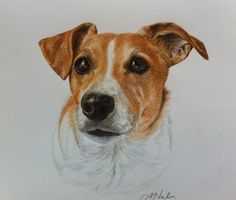 Harley from Arkadelphia, Jack Russell terrier, by Amanda Hall, ©.