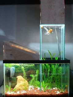 Interesting intersecting glass and concrete fishtank