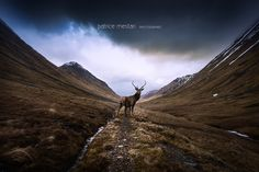 Le cerf by Patrice MESTARI on 500px