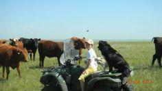 haha http://beefmagazine.com/people/180-photos-ranch-dogs