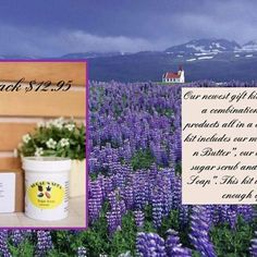 """product of the night.  Lavender Fields Gift Pack.  3 amazing products for only $12.95.  In an article on Organic Facts, """"some of the most important health benefits of lavender include its ability to relieve stress, improve mood, promote restful sleep, reduce inflammation, lower skin irritation, prevent infections, eliminate dandruff, and soothe stomach bloating.""""  You will find true lavender oil in these products which gives that beautiful calming scent we all love so much!  To order just…"""