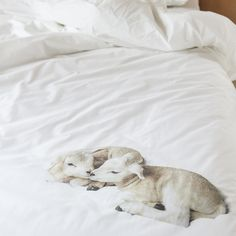 Snurk beddengoed - 100% & Wool