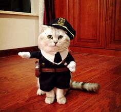 Funny Pirate / Plolice style Pet Cat Costumes  Uniform Suit Pet Cloth  Dogs cats hat Pet Supplies Puppy Cat Warm Clothes // FREE Shipping //     Buy one here---> https://thepetscastle.com/funny-pirate-plolice-style-pet-cat-costumes-uniform-suit-pet-cloth-dogs-cats-hat-pet-supplies-puppy-cat-warm-clothes/    #dog #dog #puppy #pet #pets #dogsitting #ilovemydog #lovedogs #lovepuppies #hound #adorable #doglover