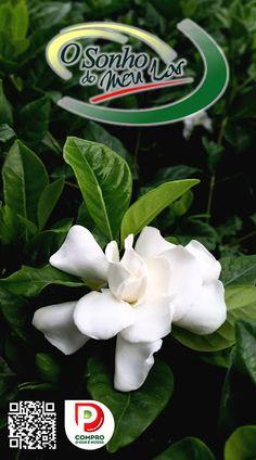 Plantas Exterior - Gardenia
