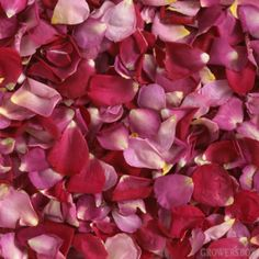 GrowersBox.com: Flowers: 3,000 Freeze Dried Rose Petals Bridal Blend: Rose Petals $99.99