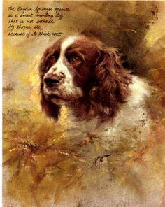 This English Springer Spaniel by Rien Poortvliet looks exactly like my grantparent´s old dog many years ago.