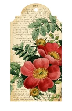 These free printable flower and romance tags will be a perfect fit. They feature illustrations of pink flowers from a floral encyclopedia. Decoupage Vintage, Decoupage Paper, Vintage Paper, Vintage Tags, Vintage Labels, Printable Tags, Free Printables, Printable Flower, Card Tags
