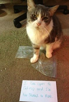 Cat shaming - I tore open the catnip and I'm too stoned to move.